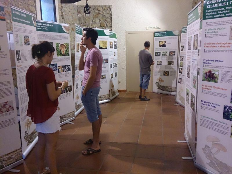 """Museu de les Terres de l´Ebre : SAM/MST : Exposició """"Els bolets de les Terres de l'Ebre. Molt més que rovellons"""""""