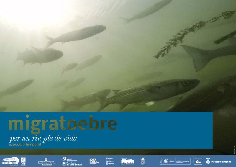 """Museu de les Terres de l´Ebre : agenda : Exposició """"MIGRATOEBRE. Per un riu ple de vida"""""""