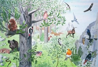 Museu de les Terres de l´Ebre : Serveis educatius : Els animals, joies de la natura
