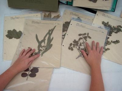 Museu de les Terres de l´Ebre : Serveis educatius : Els arbres i arbustos, descobriment de la flora