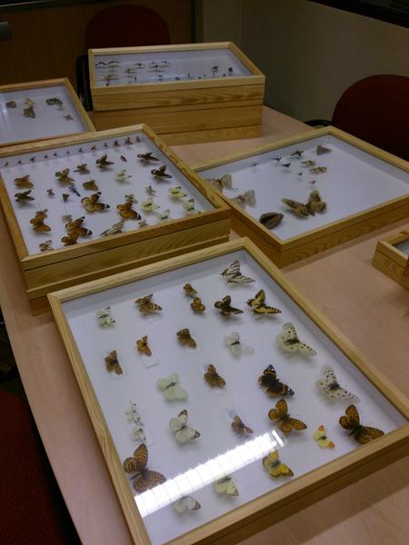 El Museu ha completat la documentació del fons de libèl·lules i papallones