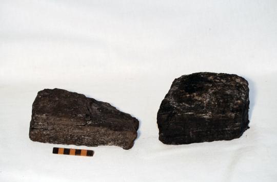 Museu de les Terres de l´Ebre :  : Lignit