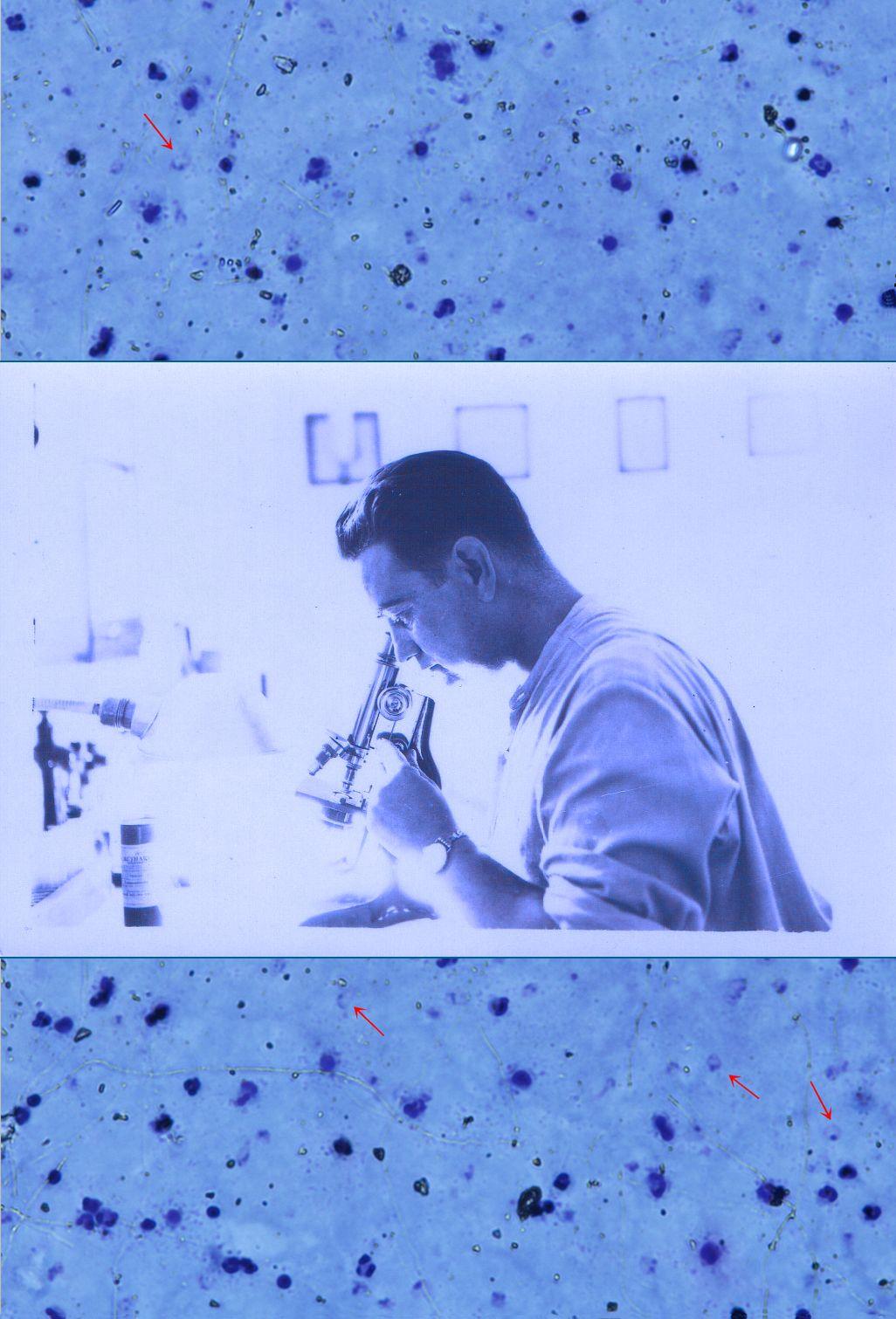 """Museu de les Terres de l´Ebre : agenda : Exposició """"La quartana i la lluita sanitària per erradicar el paludisme al delta de l'Ebre"""""""