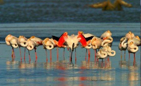 Museu de les Terres de l´Ebre : Serveis turístics : En bici per les llacunes, la vida a les basses