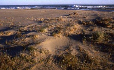 Museu de les Terres de l´Ebre : Serveis turístics : El Delta de l'Ebre, terra dins la mar