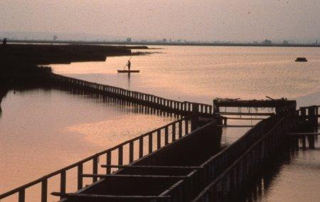 Museu de les Terres de l´Ebre : Serveis educatius : En bici per la llacuna de l'Encanyissada, la vida a les basses