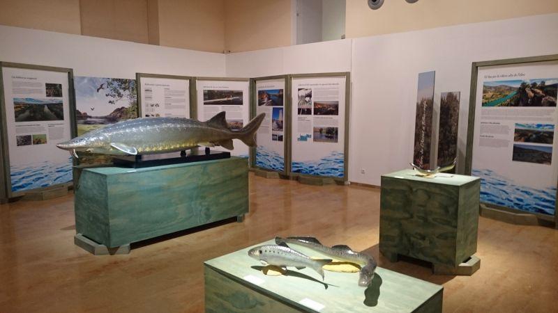 El Museu arribarà a les 500 exposicions durant el mes de maig