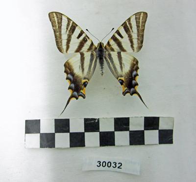 Museu de les Terres de l´Ebre :  : El Museu ha completat la documentació del fons de libèl·lules i papallones