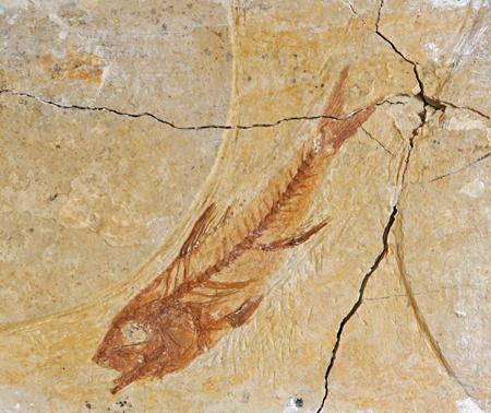 Museu de les Terres de l´Ebre :  : L'Ajuntament de Santa Bàrbara i el Museu de les Terres de l'Ebre documenten més de 3100 minerals,  peces paleontològiques i altres espècimens biològics.